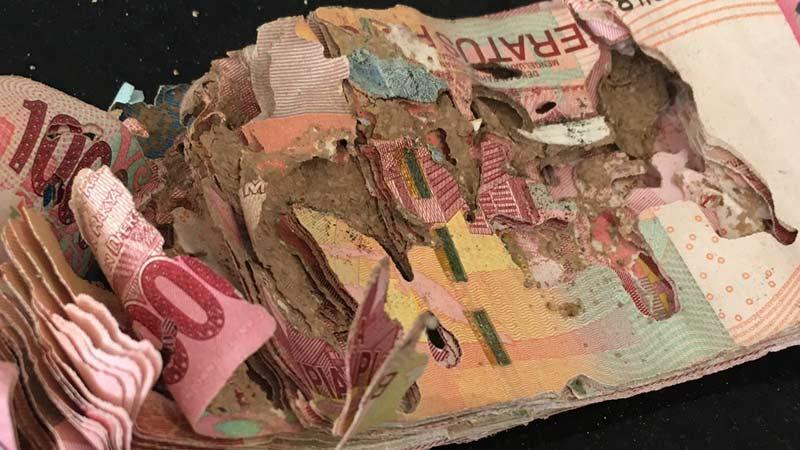 gambar uang ratusan ribu habis dimakan rayap