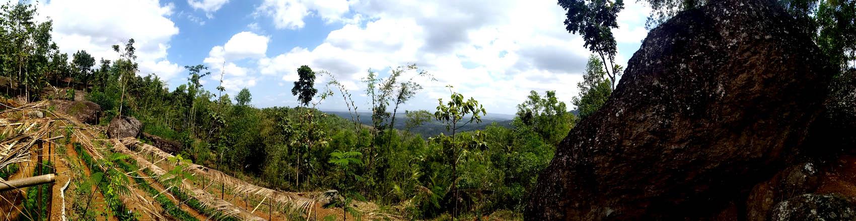 Lahan tempat Karang Taruna Dusun Glompong melaksanakan pembiakan tanaman.[Foto:NR]