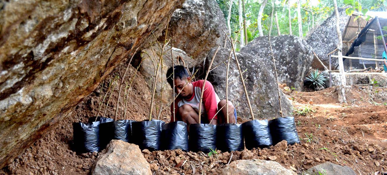 Supriyanto, ketua Karang Taruna Putra Bakti Arga meletakkan stek ficus di tempat teduh.[Foto:NR]