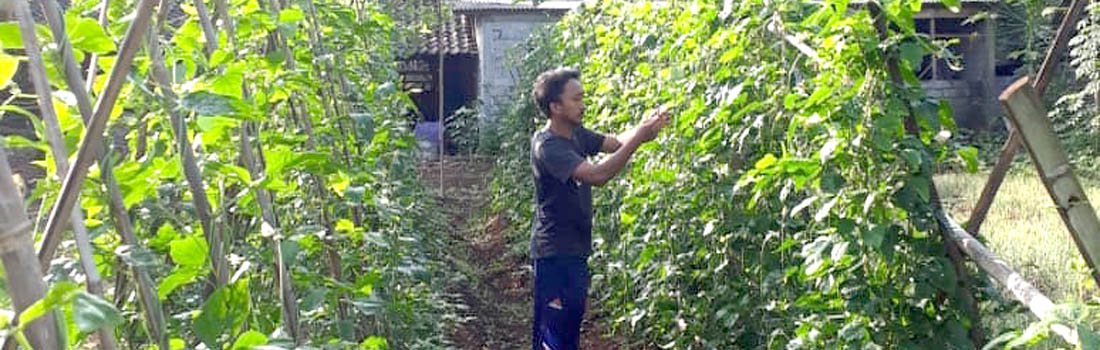 Aneka sayuran yang ditanam Imam.[Foto:Padmo]