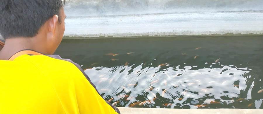 Kolam ikan yang berada di tengah pekarangan digunakan oleh Imam untuk menyirami sayuran.[Foto:Padmo]