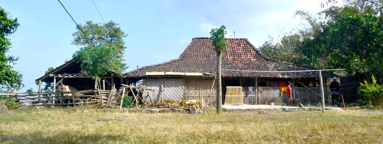 Tradisi warga Pringombo beternak sapi dan kambing di kandang di samping rumah.[Foto:nr]