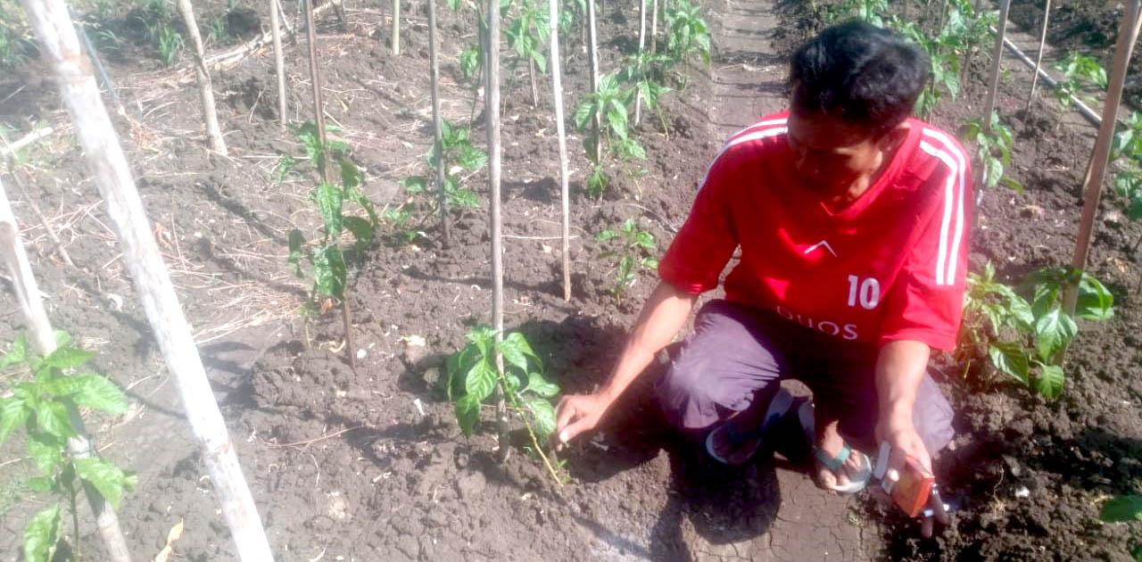 Yanto dan olahan pertaniannya.[Foto:Padmo]
