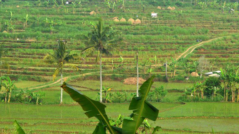 Pariwisata pertanian di sekitar Gunung Nglanggeran