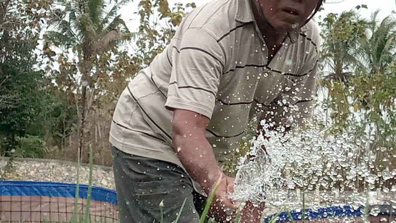 Pak Dul Ghani sedang menyirami tanaman bawang merah