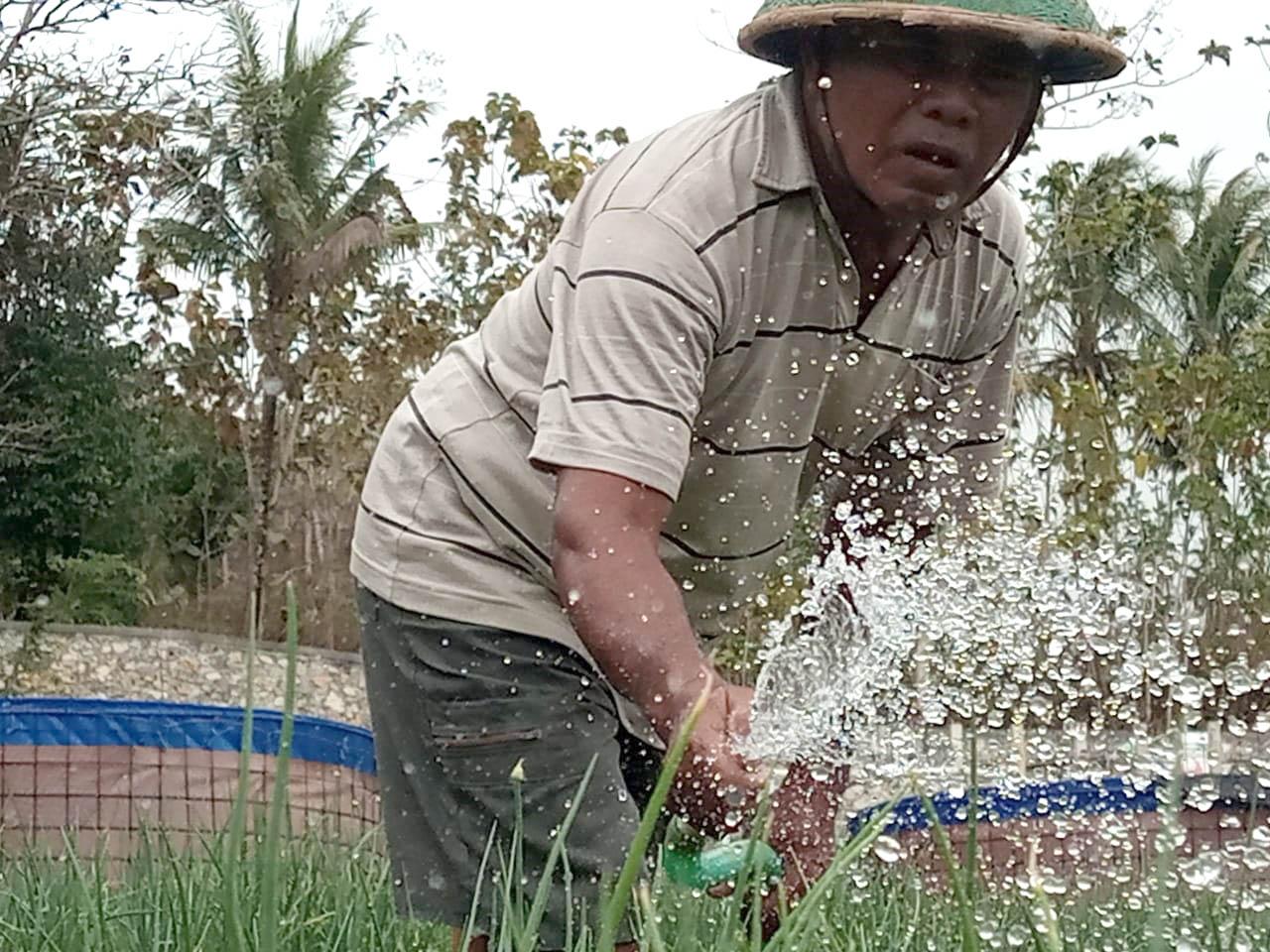 Pak Dul Ghani sedang menyirami tanaman bawang merah.[Foto:Padmo]