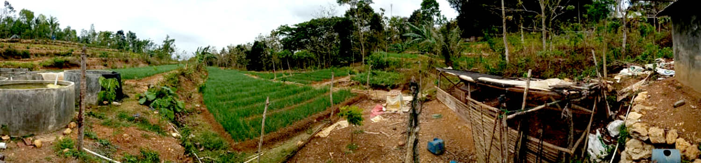 Pertanian Bawang Merah di Dusun Sumber.[Foto:Padmo]