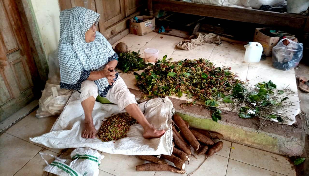 Mbah Sayem dan panenan bunga cengkeh dari kebun peninggalan suaminya, Jarwo Utomo.[Foto:Padmo]