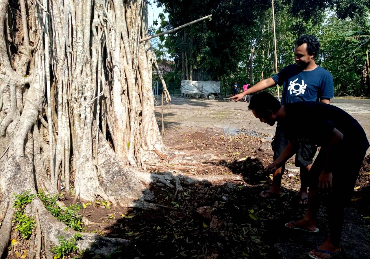Sigit dan Olan menunjukkan tanah yang berbau minyak dan akar pohon yang dirusak.[Foto:Padmo]