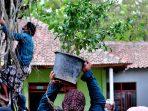 Aksi penyulaman resan beringin dalam ritual Midang di Pasar Kawak Dusun Seneng Desa Siraman Kapanewon Wonosari tahun ini