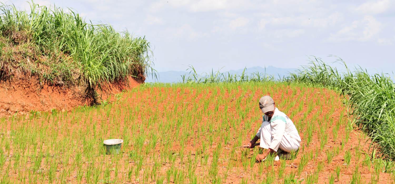 Lahan Pertanian di Gunung Sumilir.[Foto:Padmo]