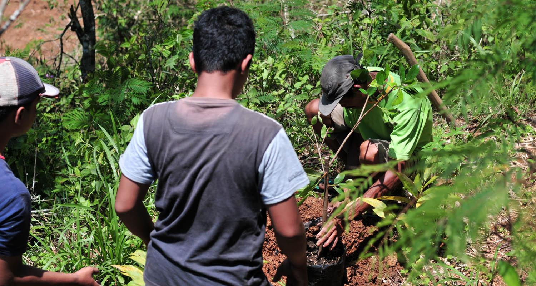 Warga Pringombo di Gunung Sumilir sedang melakukan penanaman ficus.[Foto:Padmo]