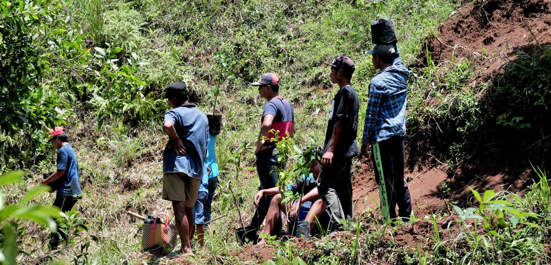Karang Taruna Dusun Pringombo di Gunung Sumilir sedang melakukan penanaman ficus.[Foto:Padmo]