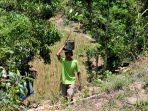 Warga Pringombo naik ke Gunung Sumilir membawa bibit ficus untuk penanaman